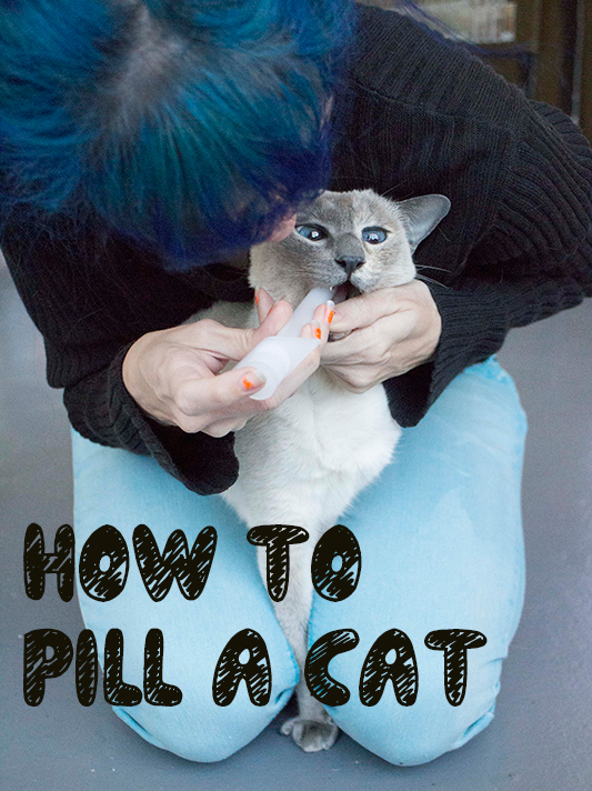 Ways-to-Pill-A-Cat_12