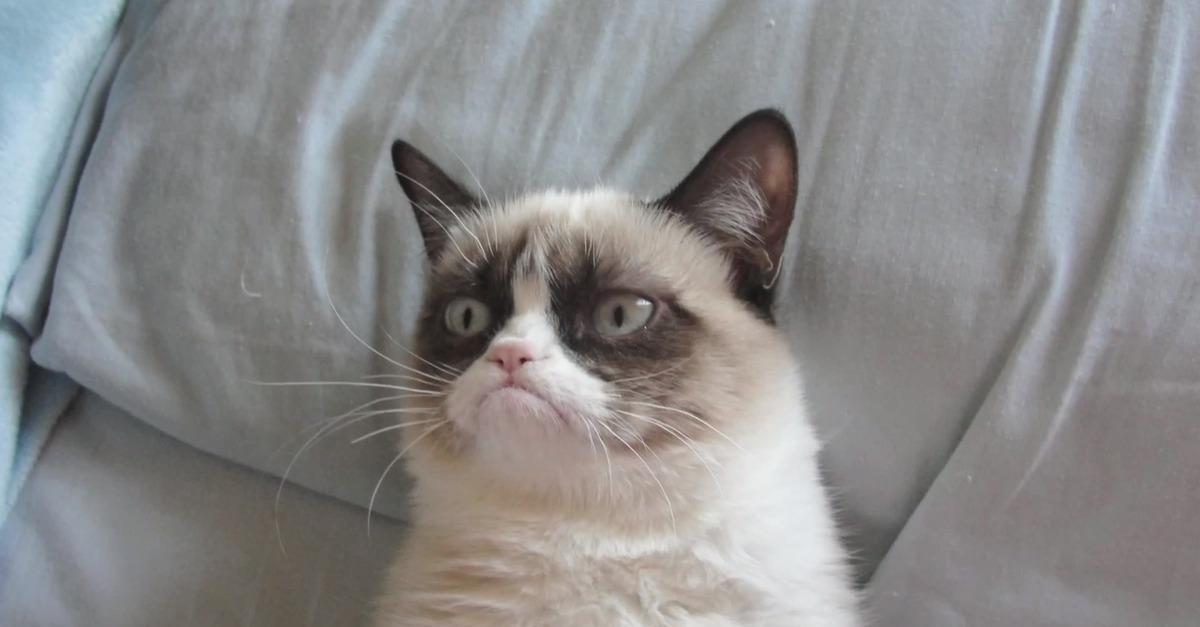 grumpy cat мем